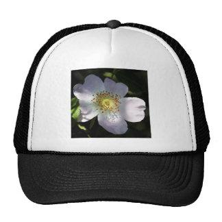 Dog Rose Trucker Hat