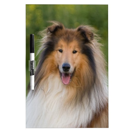 dog rough collie wait for love dry erase white board