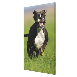 Dog Running 2 Canvas Print