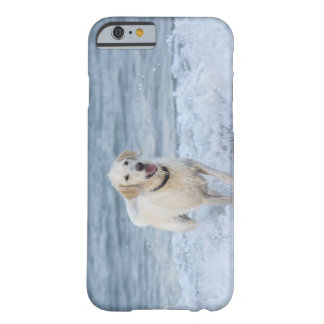 Dog running in water at beach. barely there iPhone 6 case
