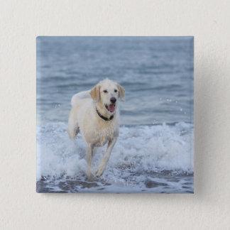 Dog running in water at beach. button