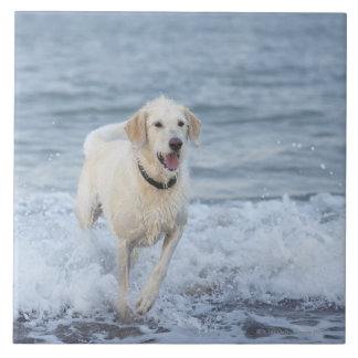 Dog running in water at beach. ceramic tile