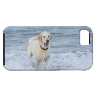 Dog running in water at beach. iPhone 5 cover