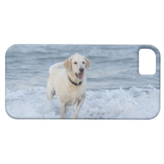 Dog running in water at beach. iPhone SE/5/5s case