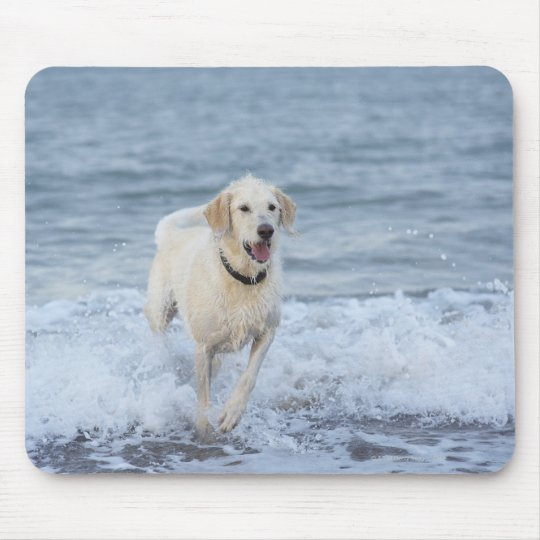 Dog running in water at beach. mouse pad