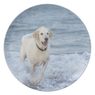 Dog running in water at beach. dinner plates