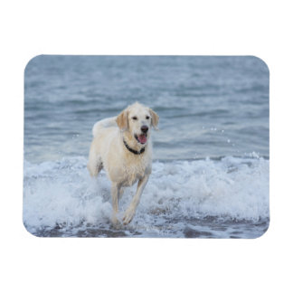 Dog running in water at beach. rectangular magnets