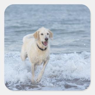 Dog running in water at beach. sticker