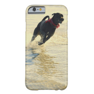 Dog running in water barely there iPhone 6 case