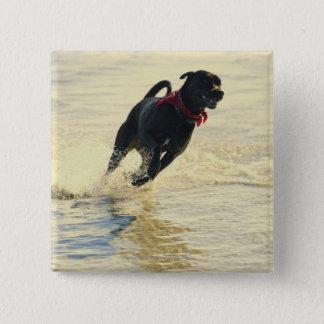 Dog running in water button