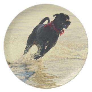 Dog running in water dinner plate