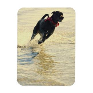 Dog running in water rectangular magnets
