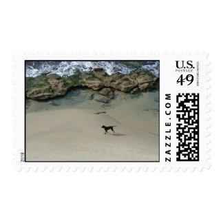 Dog running on a sandy beach stamp