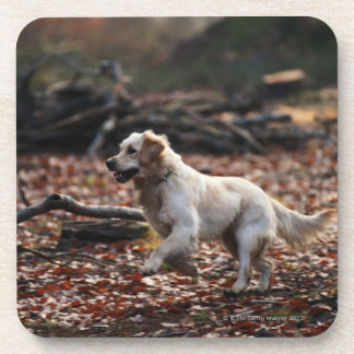 Dog running on dry leaves beverage coaster