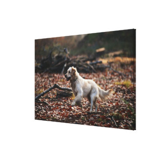 Dog running on dry leaves canvas print