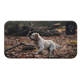 Dog running on dry leaves iPhone 4 case