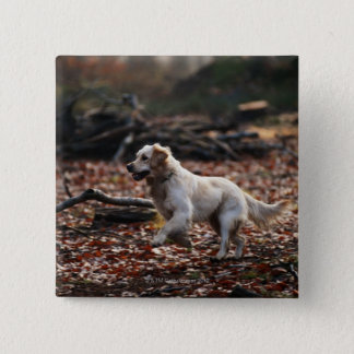 Dog running on dry leaves pinback button