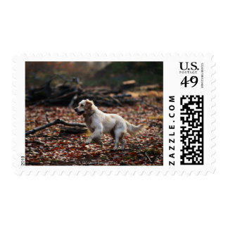 Dog running on dry leaves postage