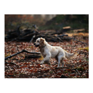 Dog running on dry leaves postcard