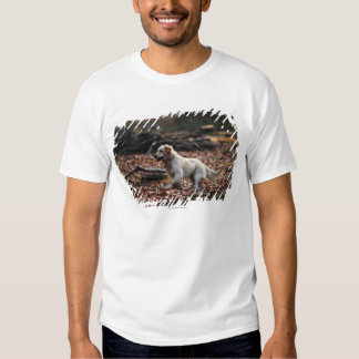 Dog running on dry leaves shirt