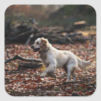 Dog running on dry leaves square sticker