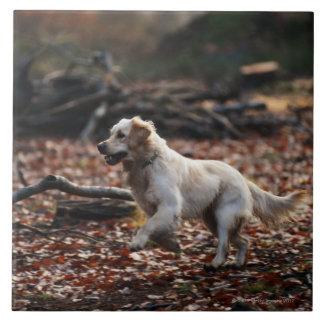 Dog running on dry leaves tile