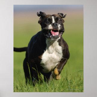 Dog Running Poster