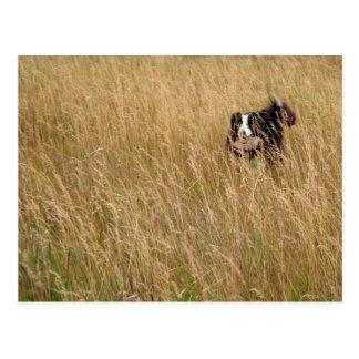 Dog running through grass postcard