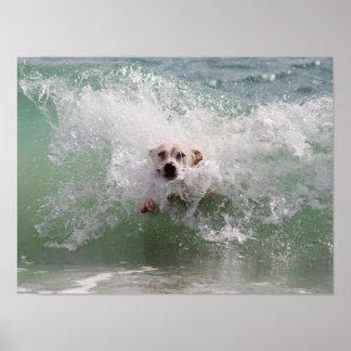 Dog Running through Ocean Wave, Surf, Beach Poster
