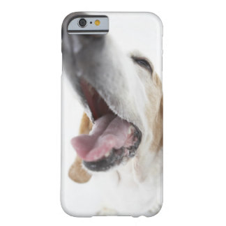 Dog 's nose,close-up barely there iPhone 6 case