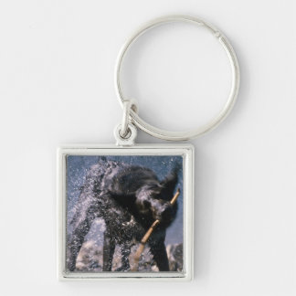 Dog Shaking Water from His Coat Silver-Colored Square Keychain