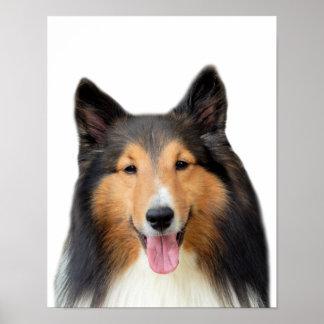 Dog Shetland Sheepdog animal pet photo Poster
