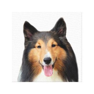 Dog Shetland Sheepdog pet animal photo Canvas Print