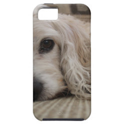 Case-Mate Vibe iPhone 5 Case with Cocker Spaniel Phone Cases design