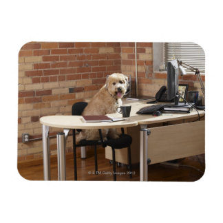 Dog Sitting at Desk Magnet