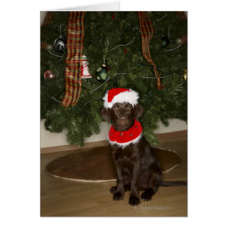 Dog sitting by a Christmas tree Card