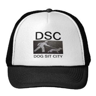 dog sitting hat