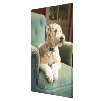 Dog sitting in armchair canvas print