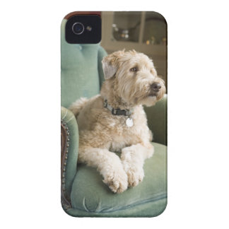Dog sitting in armchair iPhone 4 cases