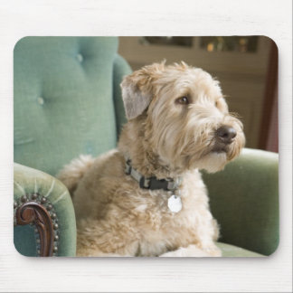 Dog sitting in armchair mouse pads
