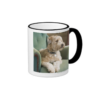 Dog sitting in armchair mugs