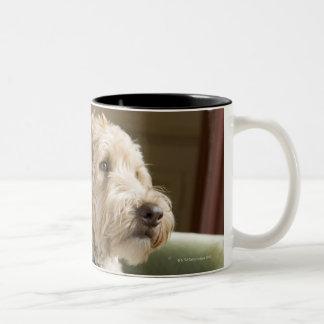 Dog sitting in armchair coffee mug