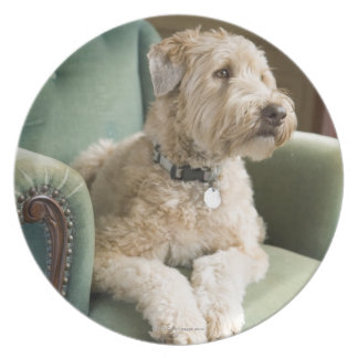 Dog sitting in armchair party plate