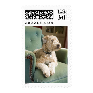 Dog sitting in armchair postage