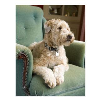 Dog sitting in armchair postcard