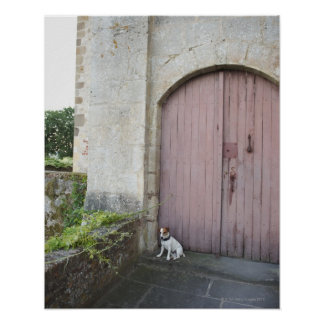 Dog sitting in front of closed doors poster