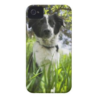 Dog sitting in grass iPhone 4 case