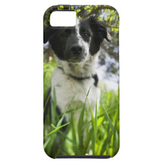 Dog sitting in grass iPhone 5 covers