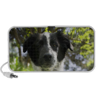 Dog sitting in grass portable speakers