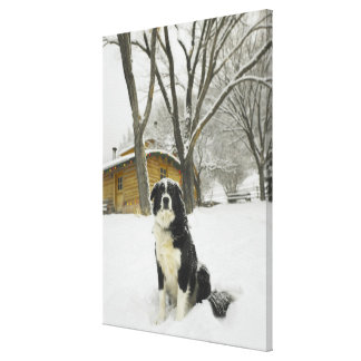 Dog sitting in snow with log cabin behind canvas print
